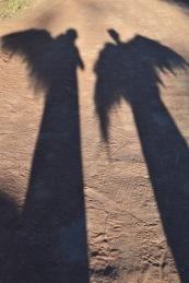 PilligaAngelShadows